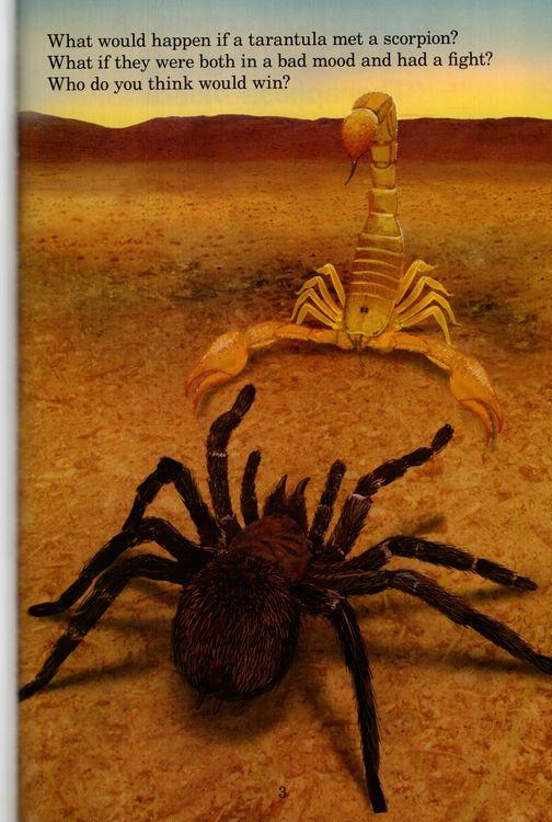 Tarantula vs Scorpion ( Who Would Win? )