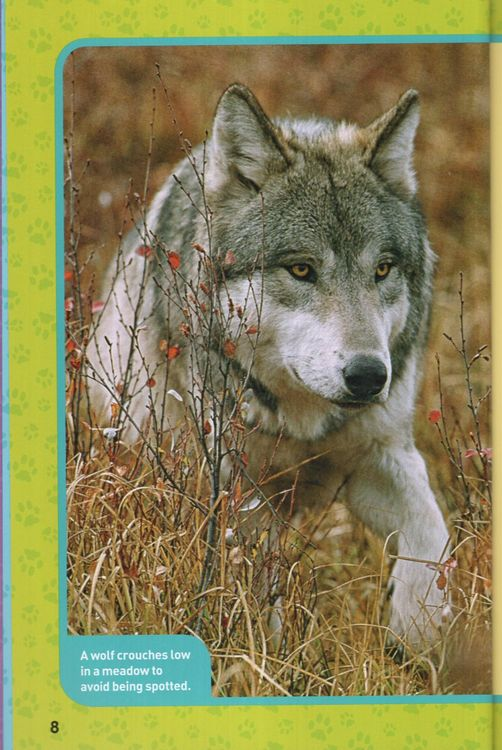 Living with Wolves!: True Stories of Adventures with ...