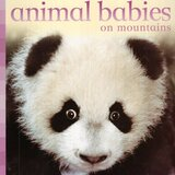 Animal Babies on Mountains ( Animal Babies ) (Board Book)
