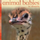 Animal Babies in Deserts ( Animal Babies ) (Board Book)